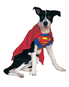 Costume Superman chien