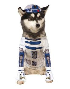 Costume R2D2 chien